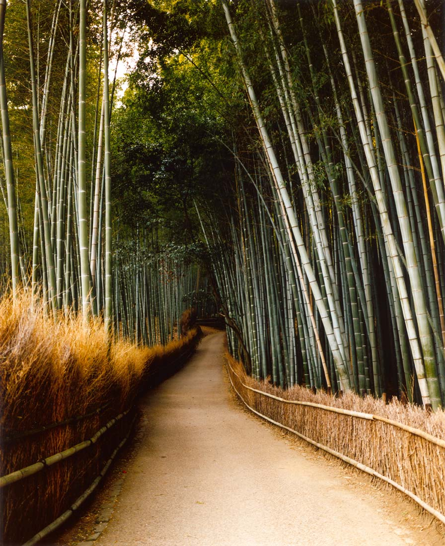 Arashiyama bamboo forest, Japan