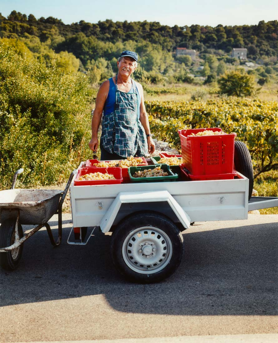 Farmer with grapes,  Vis, Croatia