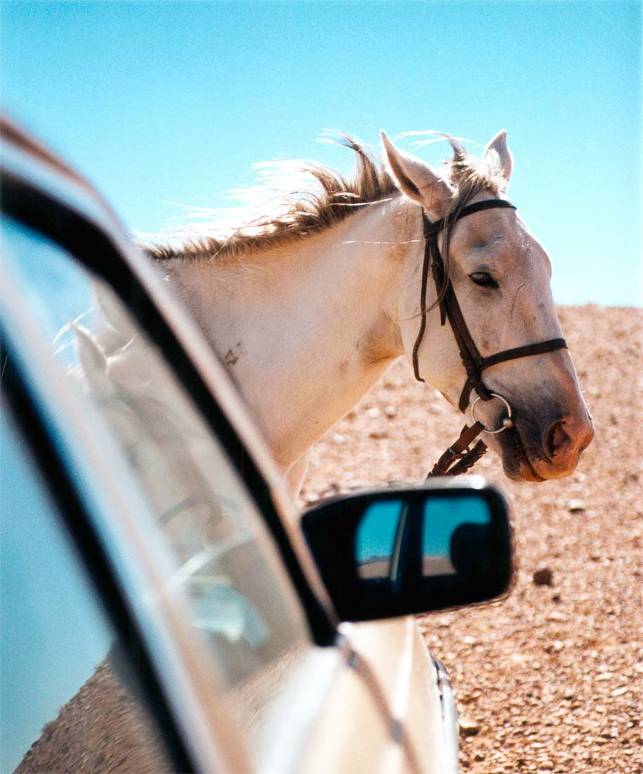Horse and taxi, Morocco