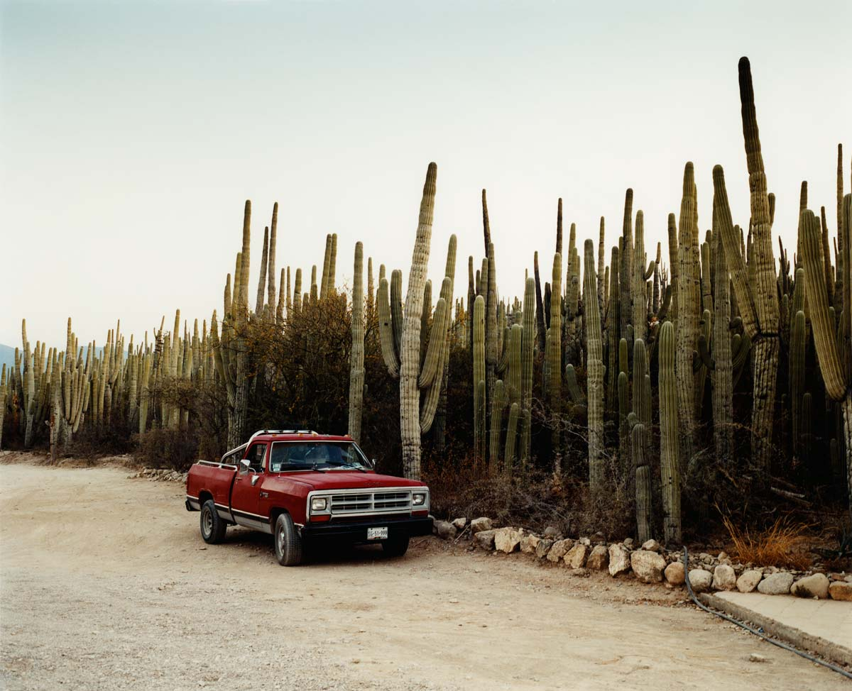 Cactus Forest, Mexico